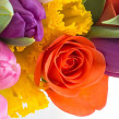 Розы от 40 рублей