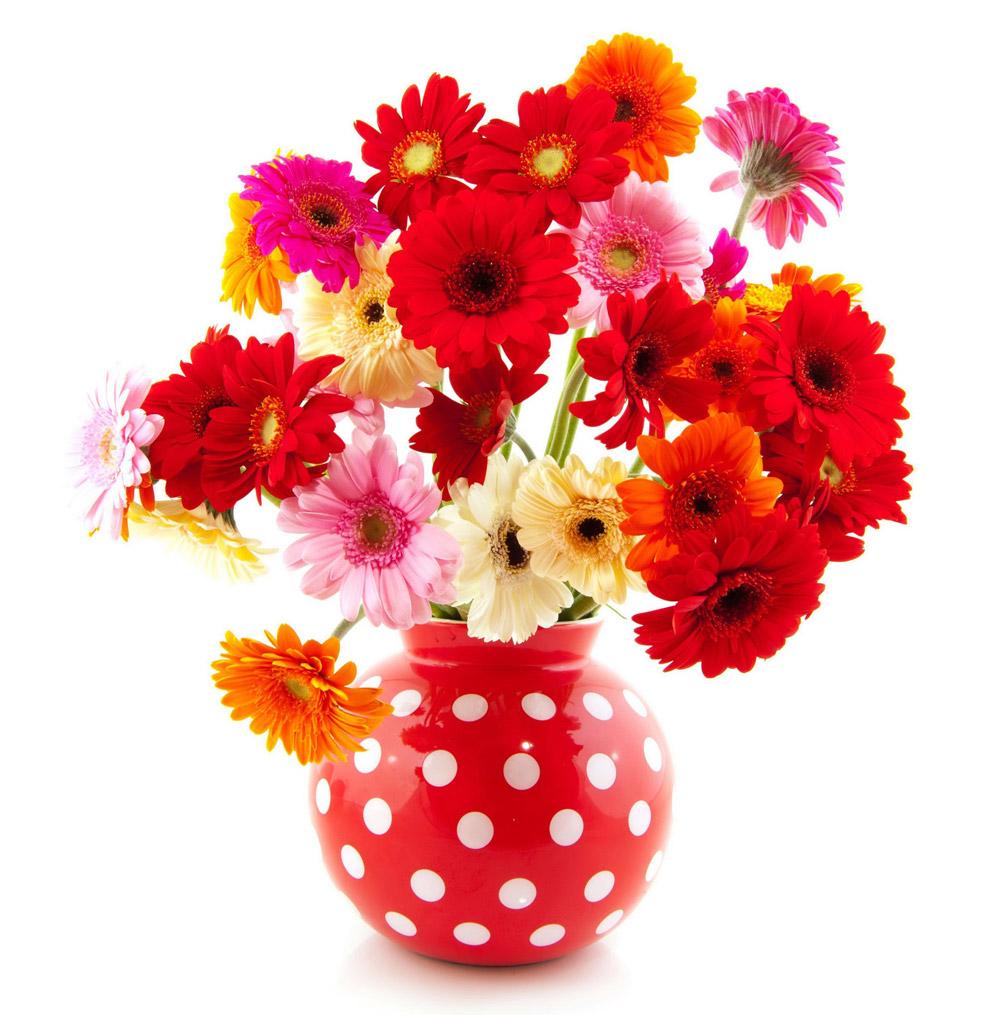 Цветы виды доставка челябинск