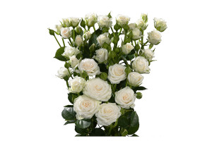 Купить розы